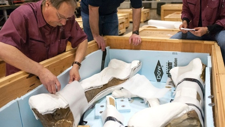 In this Tuesday, April 8, 2014 photo, released by Montana State University, Pat Leiggi, left, the Museum of the Rockies director of exhibitions and administrator of paleontology, Brian Baziak, center, preparator paleontology, and Carrie Ancell, right, senior preparator of paleontology, check the contents of a crate containing fossilized bones from a Tyrannosaurus rex in Bozeman, Mont.