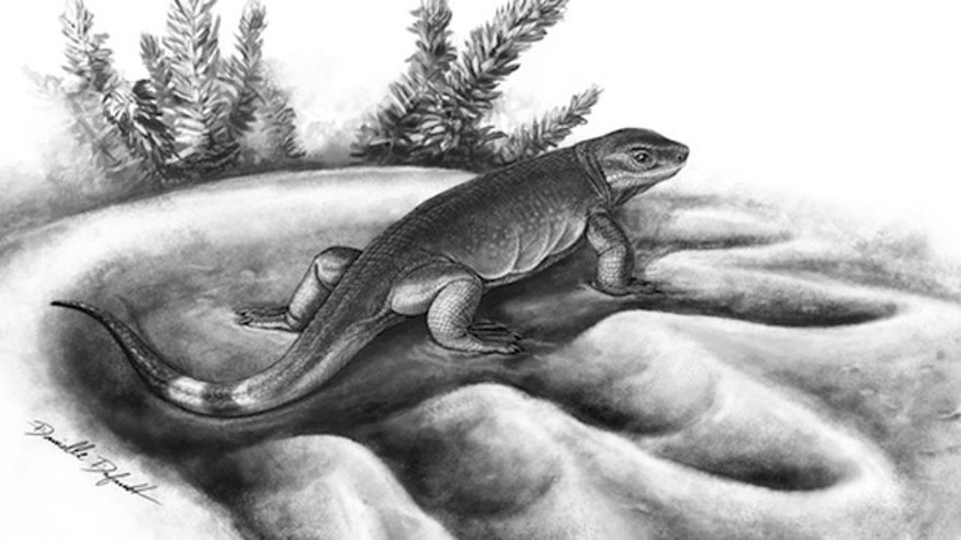 A reconstruction of 300 million-year-old tiny carnivorous Eocasea in the footprint of 270 million-year-old largest known herbivore of its time, Cotylorhynchus