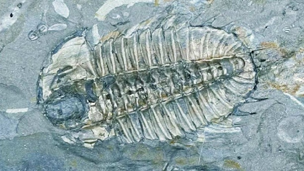 the mystery surrounding the infamous cambrian explosion The article laid out the evidential case for intelligent design, presenting it as the best explanation for the origin of the biological information necessary to produce the new forms of animal life that arose abruptly during the cambrian explosion.