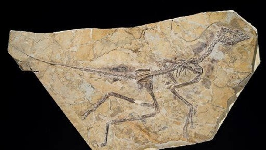 10K dinosaur species live on 'in form of birds,' says study author.