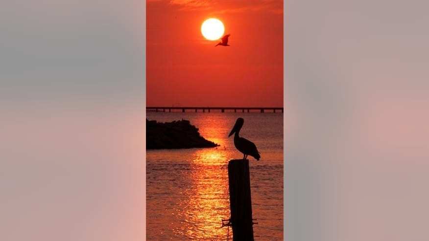 A brown pelican is silhouetted against the setting sun on Lake Pontchartrain in New Orleans on Thursday, Aug. 23, 2007.