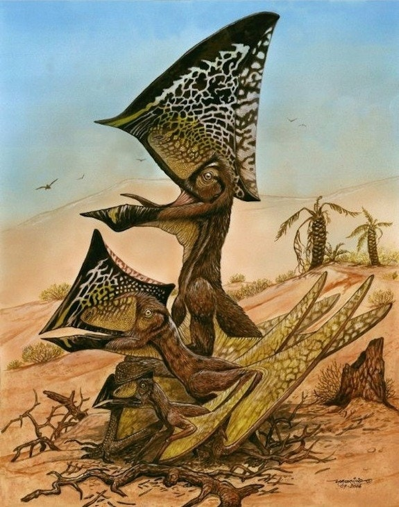 Flock of ancient 'butterfly-headed' flying reptiles discovered