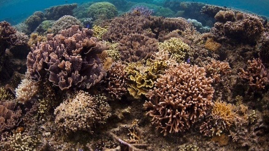 Corals thrive in the marine protected area of Votua Village in Fiji, one of the three protected areas used in the study.