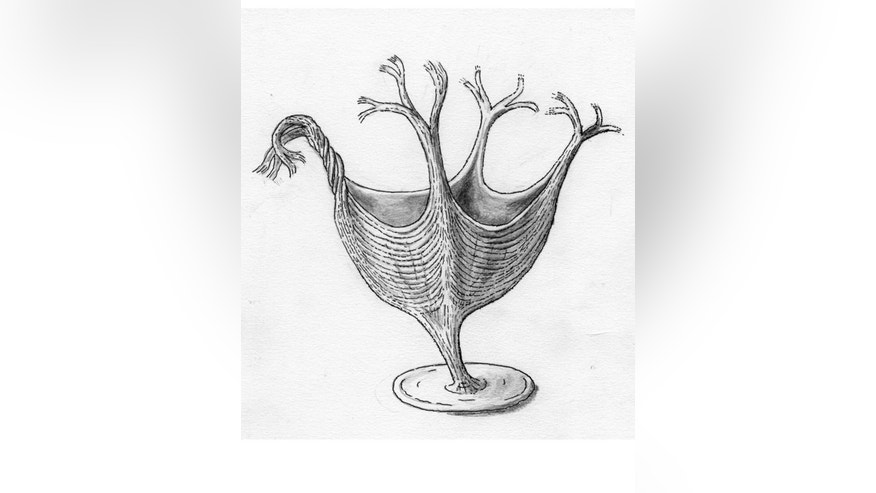 <em>H. quadriformis</em>, shown here in this artist illustration, had fibrous muscles similar to some modern cnidarians.