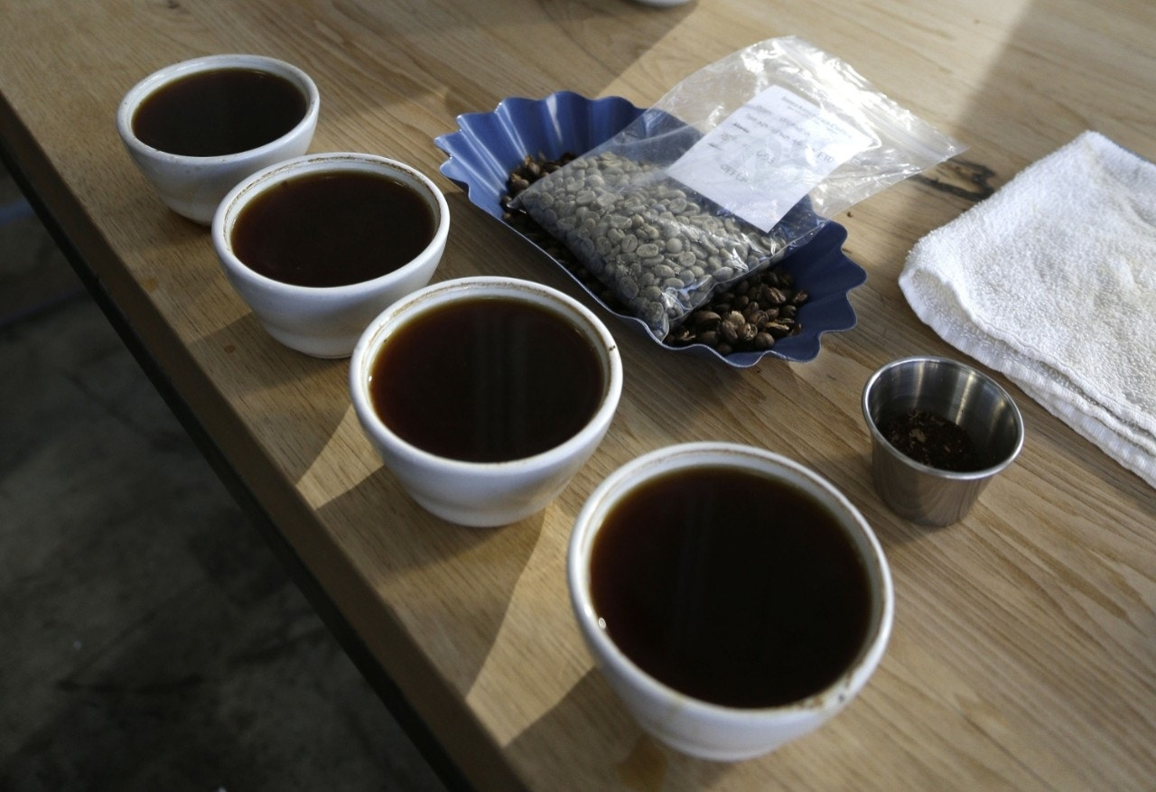 The buzz on caffeine in coffee: A genetic quirk