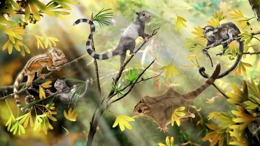 Here, a reconstruction of arboreal mammals in a Jurassic forest. The three animals on the left side represent three newfound species of euharamiyidan mammals that lived some 160 million years ago.