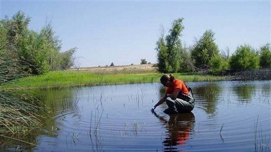 In this June 8, 2009, photo provided by the US Geological Survey, USGS California Water Science Center research hydrologist Kelly Smalling collects water samples for pesticide analysis.