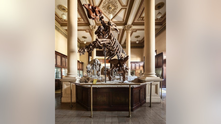 The skeleton of a megatherium, an elephant-size sloth native to South America, at the La Plata museum in Argentina.