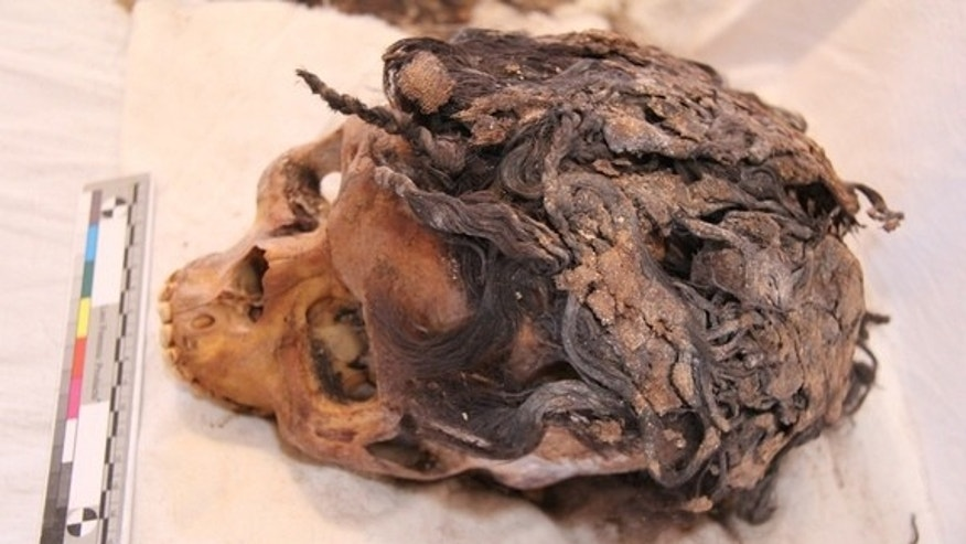 The remains of a 3,300-year-old woman who wore a complex hairstyle with 70 hair extensions was discovered in the ancient city of Armana.