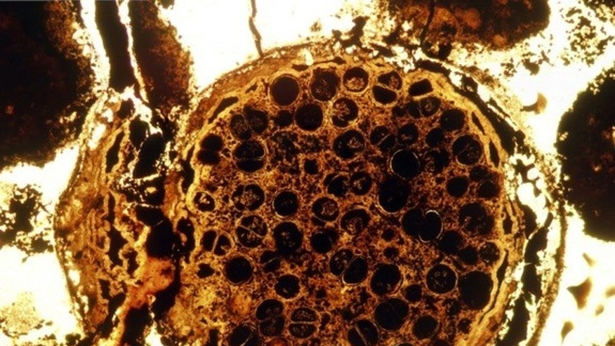 Strange multicellular spherical fossils dating back 600 million years were discovered in South China's Doushantuo Formation.
