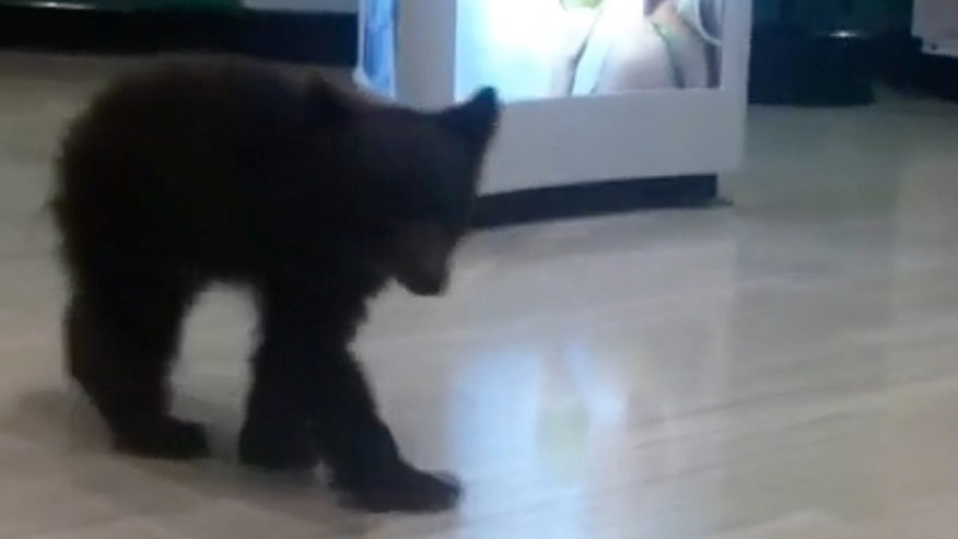 This Sunday, Oct. 19, 2014 still image from Video provided by Robin A. Bishop shows a bear cub walking through a Rite Aid store in Ashland, Ore., Sunday Oct. 19, 2014.  Witnesses say the cub first showed up Sunday, Oct. 19, 2014 at a nearby hotel, hopped out a window and crossed the street to the Rite Aid in Ashland, a city just north of the California border. (AP Photo/Robin A. Bishop)