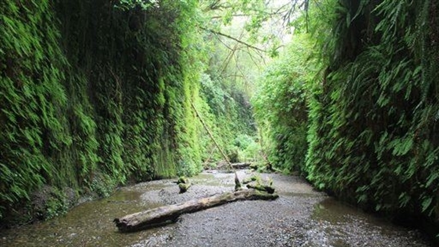 This May 3, 2014 photo shows Fern Canyon, a narrow half mile slot with 50 walls covered in multiple types of fern in Prairie Creek Redwoods State Park in northwest California.