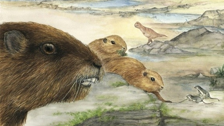 An artist's interpretation of the mammal Vintana sertichi, which lived during the time of the dinosaurs about 66 to 72 million years ago on the supercontinent Gondwana.