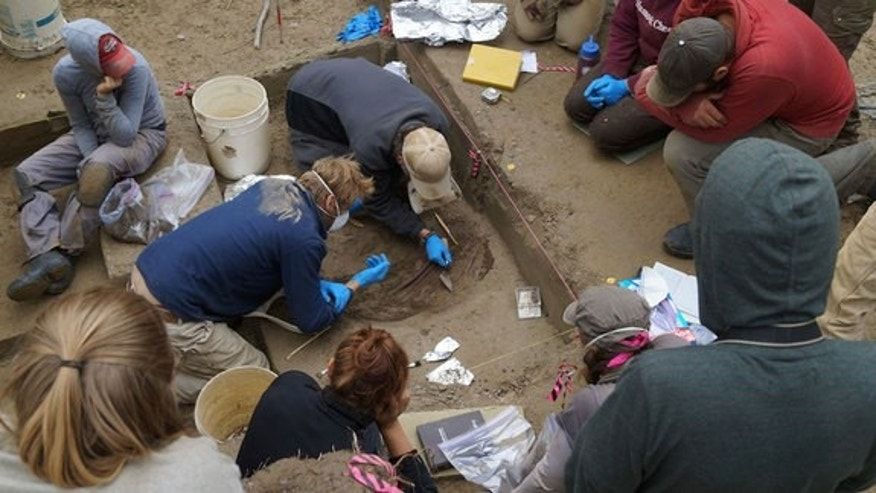 The excavation of a double infant burial dated to the last ice age, at the Upward Sun River site in Alaska.