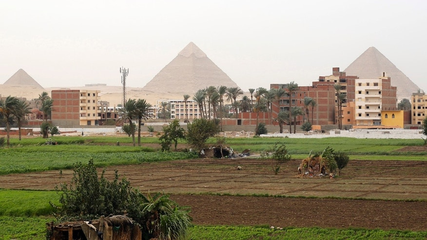 Farmers work at a rice field near the Great Giza pyramids on the outskirts of Cairo Nov. 2, 2014.