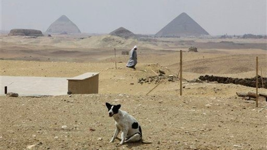 A stray dog is seen at an archaeological site in Egypt this year.