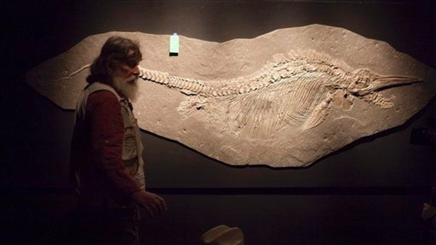 A fossil of an ichthyosaur (not the Dearcmhara shawcrossi) is shown.