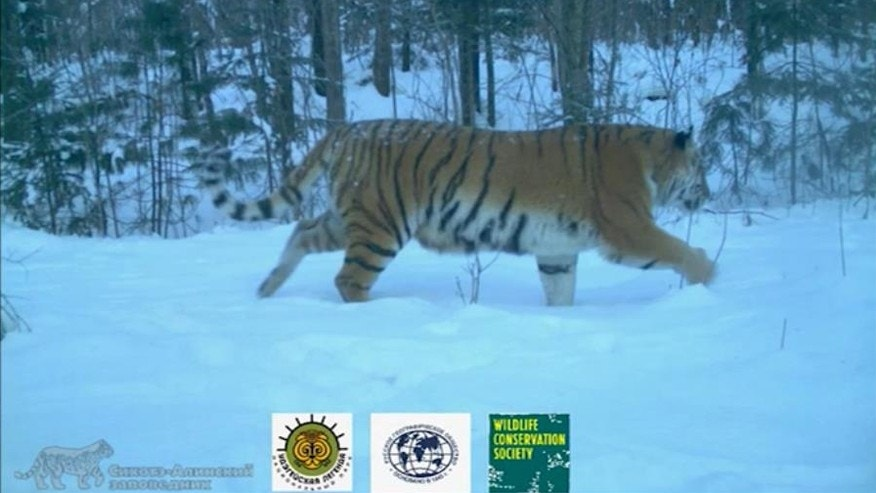 YouTube screenshot from Wildlife Conservation Society