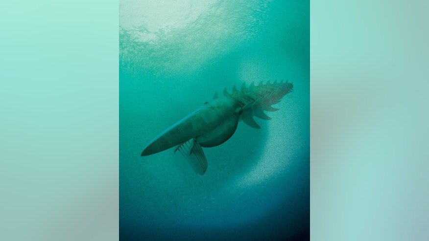 An illustration of the anomalocaridid (Aegirocassis benmoulae), a giant filter feeder that fed on plankton and lived in the Early Ordovician about 480 million years ago. The animal measured about 7 feet in length.