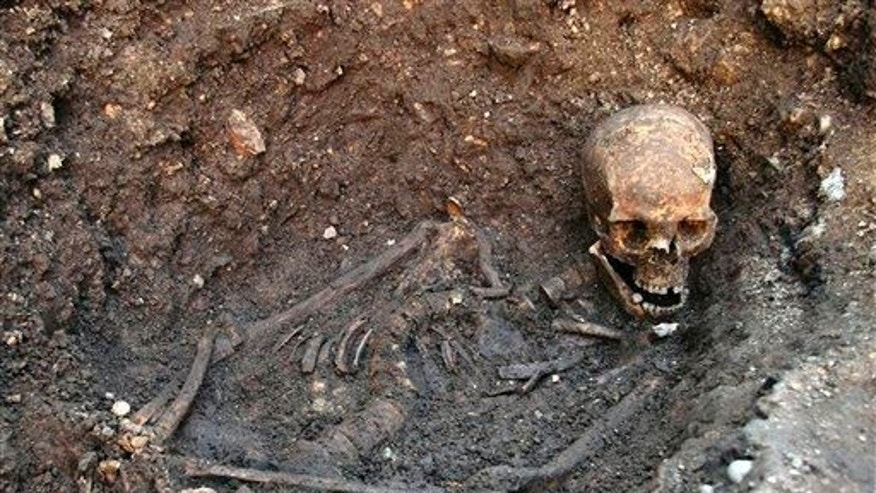 This photo released by the University of Leicester shows the remains of Richard III as they were found underneath a car park in Leicester, England in 2012.