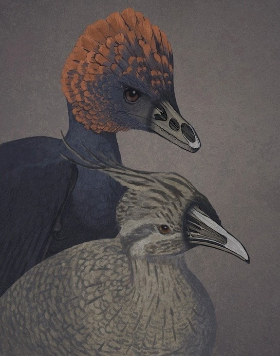 Chicken embryos with dinosaur snouts created in lab