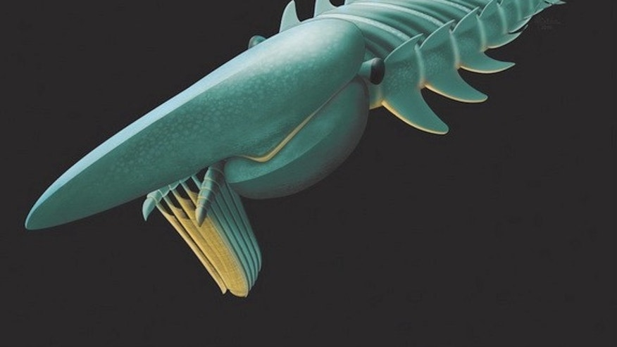 An artist's interpretation of Aegirocassis benmoulai, a remarkably well-preserved 480-million-year-old arthropod known as an anomalocaridid.