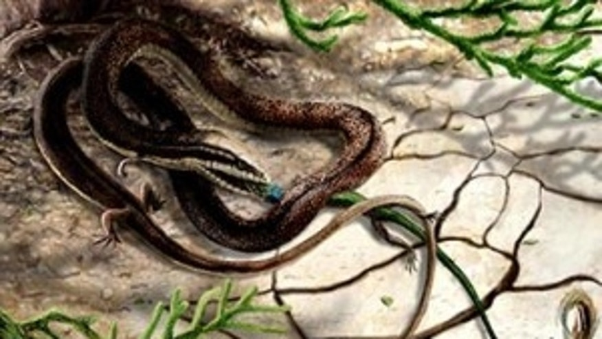 Artist's impression of Tetrapodophis amplectus with its prey, olindalacerta (salamander).