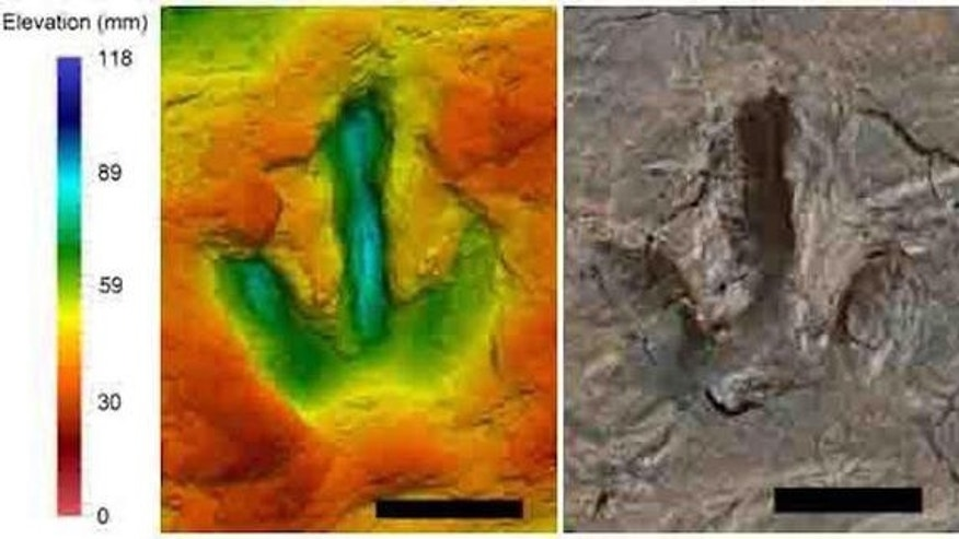 A footprint, thought to belong to a species of <i>megalosauripus</i>, a type of meat-eating theropod dinosaur. The false color scale shows show far the footprint goes down.