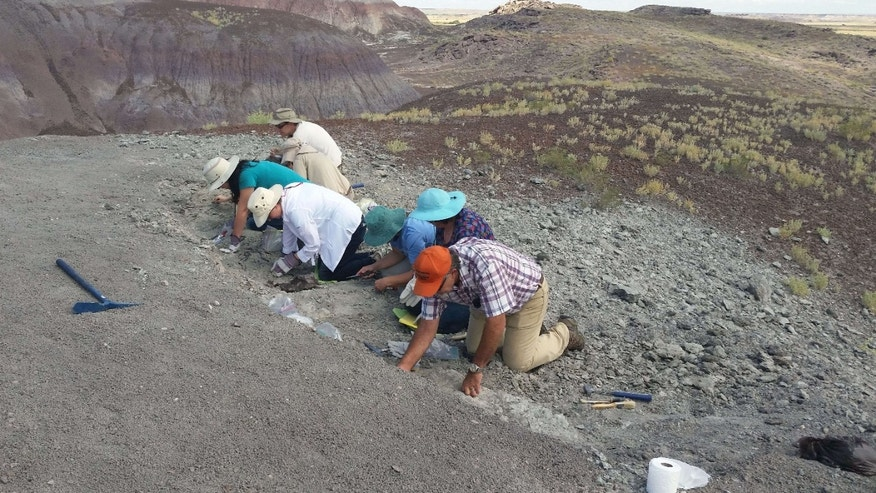 In this photo taken Saturday, Aug. 8, 2015 and released by the National Parks Service, a group of citizens digs for fossils at Petrified Forest National Park near Holbrook, Ariz.