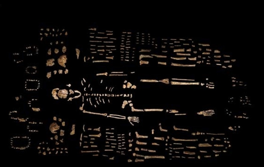 This photo provided by National Geographic from their October 2015 issue shows a composite skeleton of Homo naledi surrounded by some of the hundreds of other fossil elements recovered from the Rising Star cave in South Africa. (Robert Clark/National Geographic, Lee Berger/University of the Witwatersrand via AP)