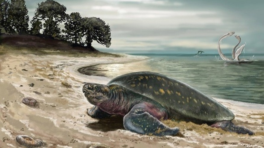 An illustration of the now-extinct sea turtle <em>Desmatochelys padillai</em>.