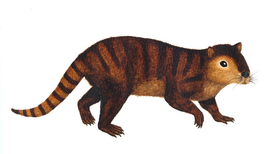 A reconstruction of the animal.