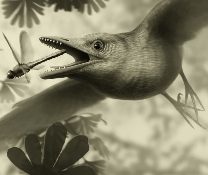 Fossil could settle the debate over whether early birds really did fly