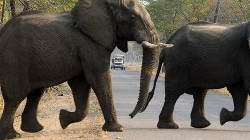 A file photo of elephants in Hwange National Park in Zimbabwe. This doesn't show the elephant that was shot.