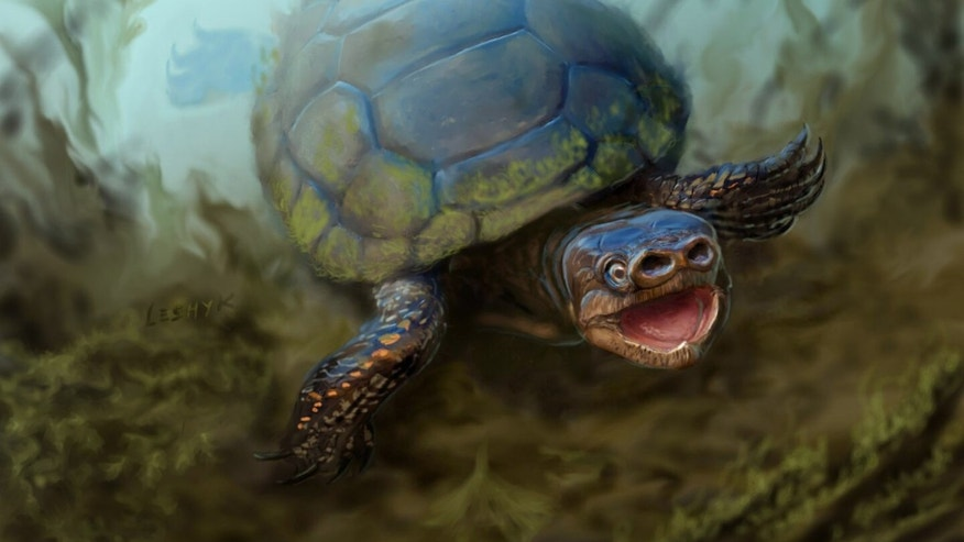 This undated illustration provided by the University of Utah shows a pig-snouted turtle that lived alongside tyrannosaurs and duck-billed dinosaurs. (Victor Leshyk/University of Utah via AP)