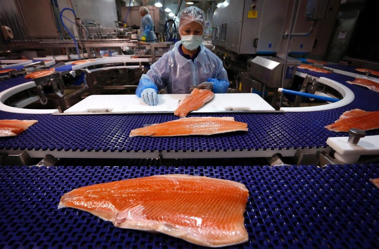 the benefits in consuming genetically modified salmon Ge or genetically engineered salmon is the first of it's kind, so aquabounty is blazing a new path this genetically modified pig is reportedly more greener, emitting significantly less pollutants in the aquabounty ge salmon benefits outweigh the risks currently the salmon population is in danger.