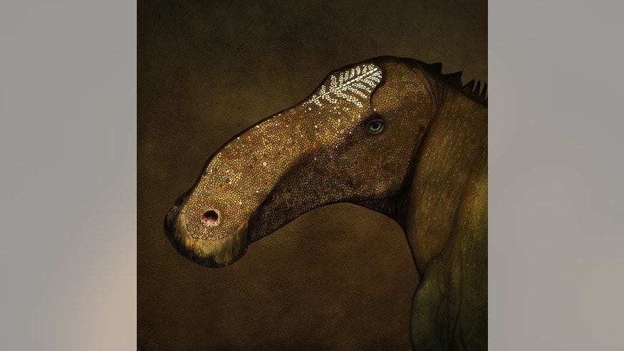 Artist's reconstruction of the head of Probrachylophosaurus bergei in life.