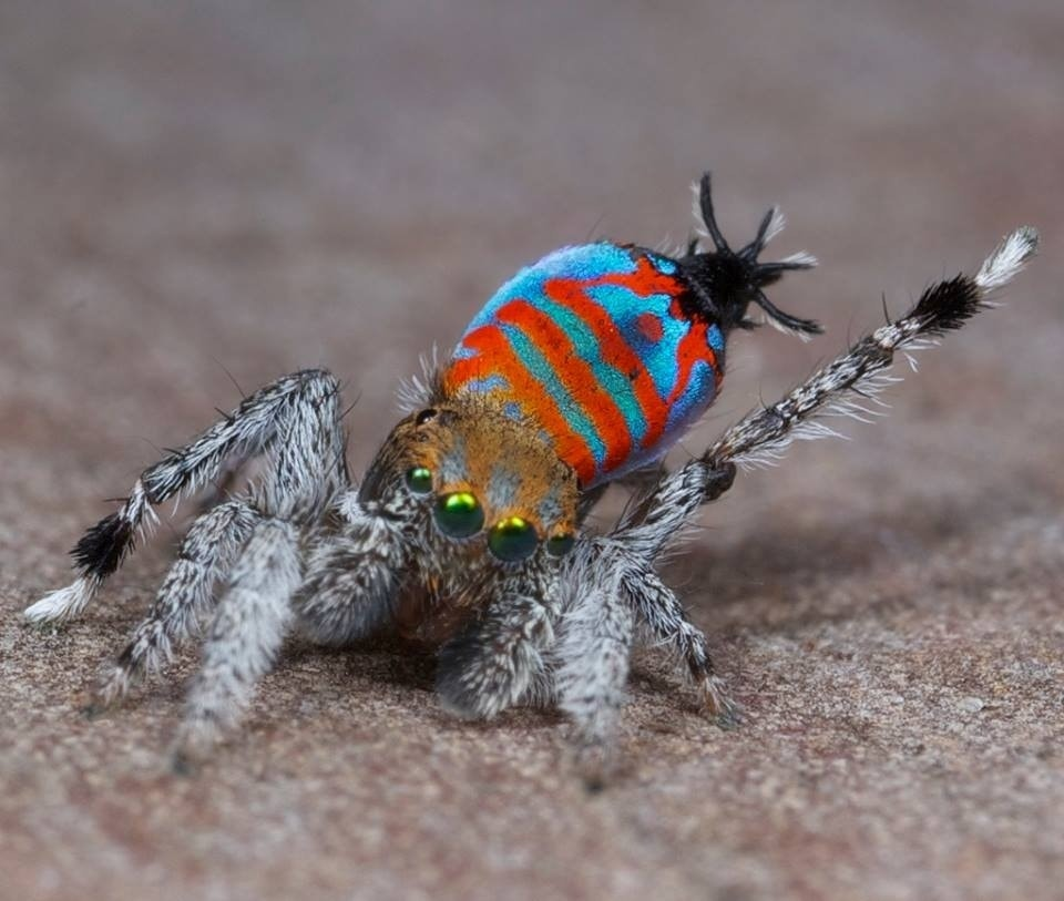 10 strangest animal discoveries of 2015