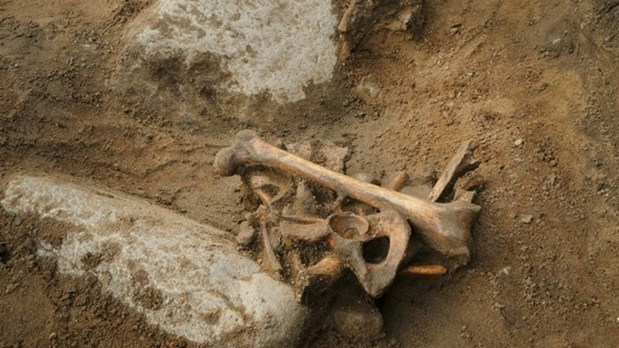 "The 16th-century man's remains were originally found in a shallow grave ""in a crouched position,"" suggesting that this was not a ceremonial burial."