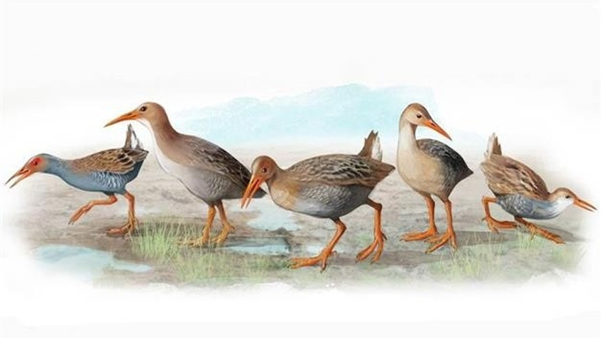 Scientists discover five extinct species of bird
