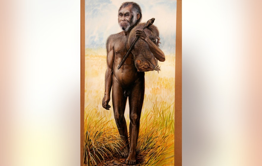 An artist's drawing sits on display at the Australian Museum in Sydney October 28, 2004 of a newly discovered species of hobbit-sized humans that adds another piece to the complex puzzle of human evolution.