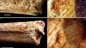 Researchers found carnivore tooth marks on the ends of a hominin femur bone. The close-ups on the right are magnified 20 times.