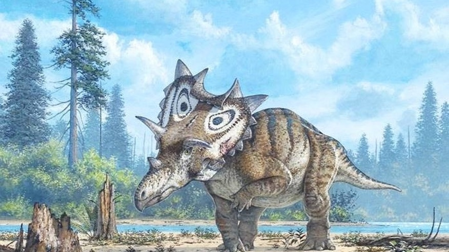 Spiclypeus shipporum, shown here in an artist illustration, would have plodded along a 76 million years ago in what is now the Judith River Formation of Montana.