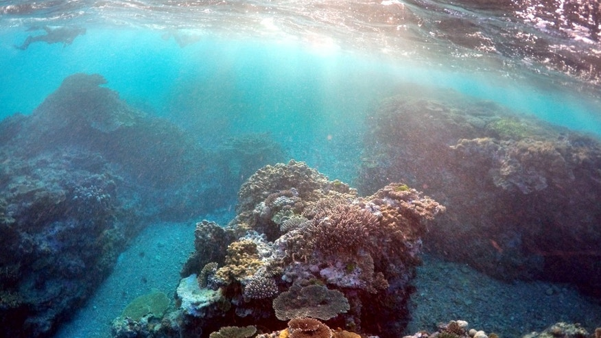File photo - Great Barrier Reef (REUTERS/David Gray/File photo).