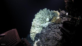 A sponge the size of a minivan, the largest on record, was found in 2015 during a deep-sea expedition in Papah?naumoku?kea Marine National Monument off Hawaii.