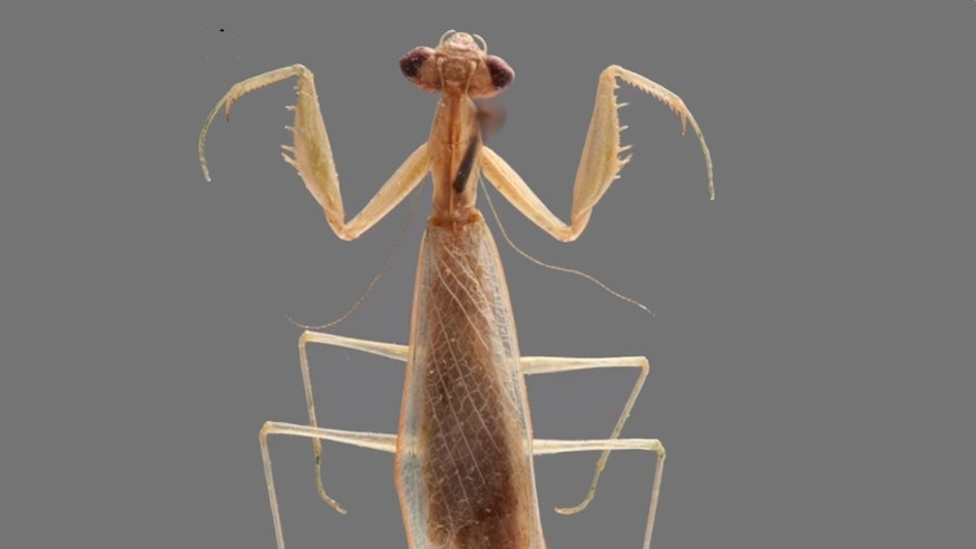 A newly identified praying mantis from Madagascar has been named Ilomantis ginsburgae after Supreme Court Justice Ruth Bader Ginsburg.