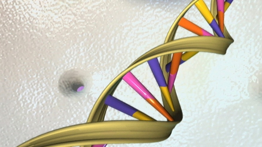 A DNA double helix is seen in an undated artist's illustration released by the National Human Genome Research Institute to Reuters on May 15, 2012.