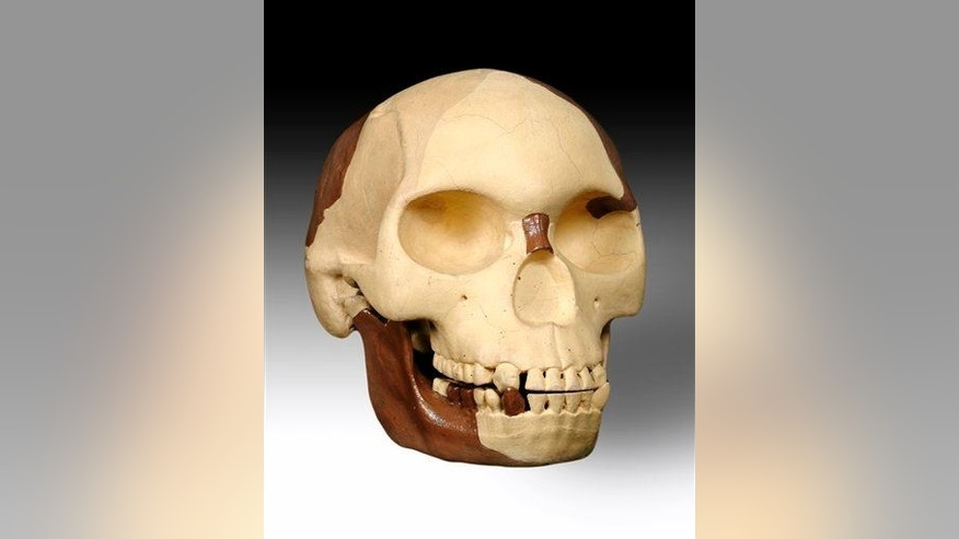 A image of the Piltdown Man, supposedly a missing link in human evolution but actually a scientific hoax perpetrated in 1912.