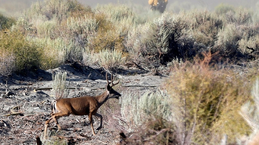 A deer runs during the Blue Cut fire near Wrightwood, California U.S., Aug. 17, 2016. (REUTERS/Mario Anzuoni).