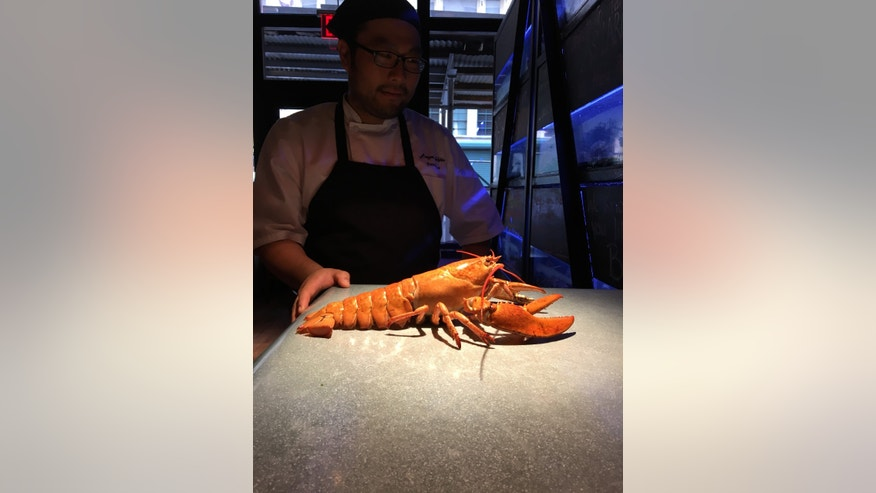 Danny Lee, executive chef at Burger & Lobster in New York, with Ruby the lobster.